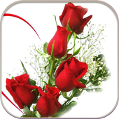 HD Rose Flowers Live Wallpaper  APK 1.0