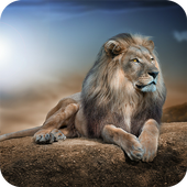 Lions HD Wallpaper For PC