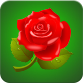Rose Wallpaper HD 1.0.1 Android for Windows PC & Mac