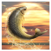 Download Big Fish King 1.0.0 APK File for Android