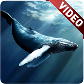 Blue Whale Video Live Wallpaper app in PC - Download for