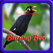 Kicau Burung Beo Bicara New App In Pc Download For Windows 7 8