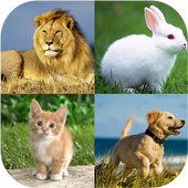 Animal quiz - Animal matching 1.0 Android for Windows PC & Mac