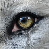 Wolf Online 2 APK 2.0.4