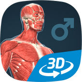 Human body (male) educational VR 3D