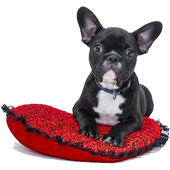 Dog breeds 1.0.9 Latest Version Download