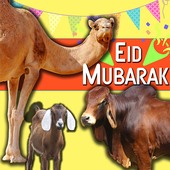 Eid Animal Transport Truck