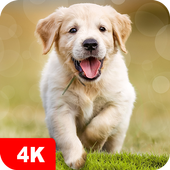 Dog Wallpapers & Puppy Backgrounds 5.0.94 Latest Version Download