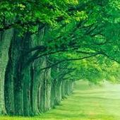 Green Nature HD Wallpaper 1.0 Android for Windows PC & Mac